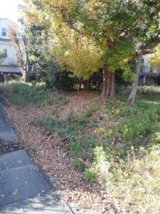 秋の終わりに落ち葉はつきものですが…量が…(><)